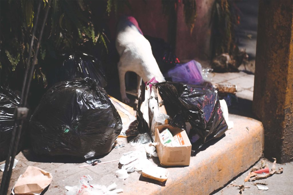 dog scavenging plastic garbage
